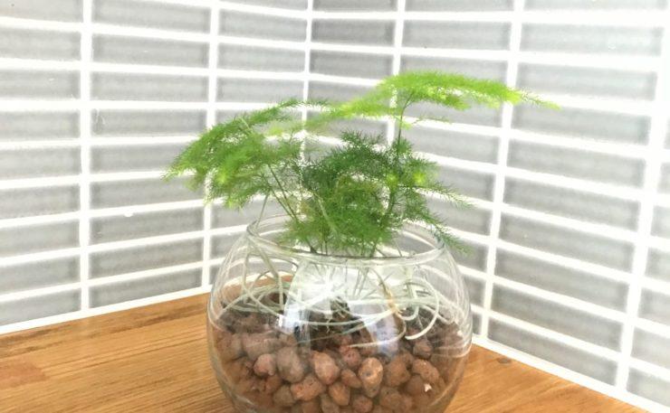 涼を呼ぶ indoor green style(ミニ観葉作り)
